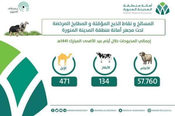 أمانة المدينة تُشرف على ذبح 57,760 أضحية خلال أيام العيد