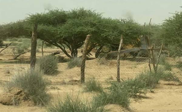 لجنة تعديات محافظة بيش تزيل 22 ألف متراً مربعاً