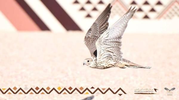 مهرجان الملك عبدالعزيز للصقور يعزز دور المملكة في التوازن البيئي عبر
