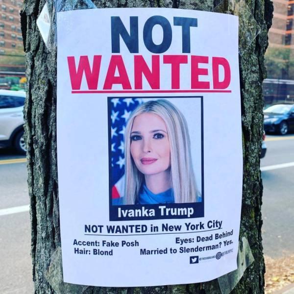 منشور معلق على جذع شجرة فى نيويورك