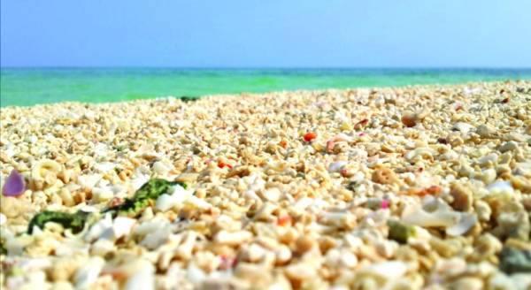 المرجان المضيء والرخام البحري يجتذبان سياح فرسان