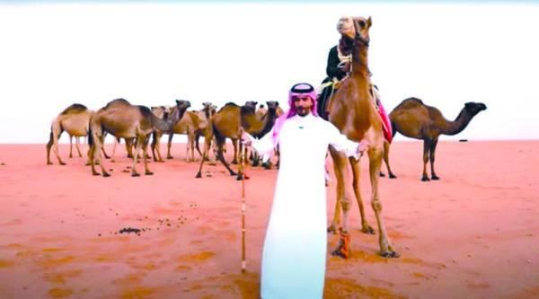 السعوديون ينقلون تراث «الإبل» من الصياهد إلى جيل الـ«Youtube»