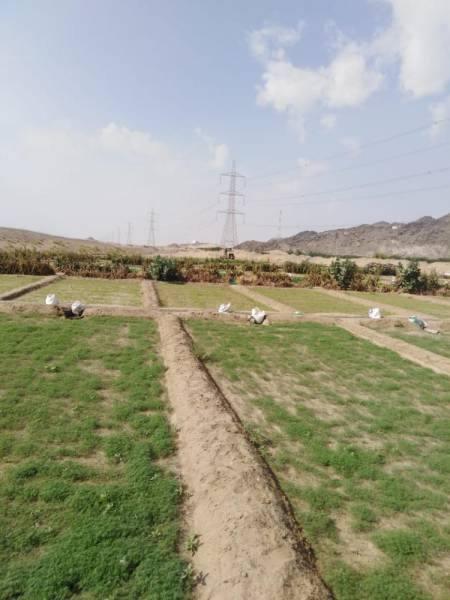 إزالة 4 مزارع مخالفة بعمرة مكة