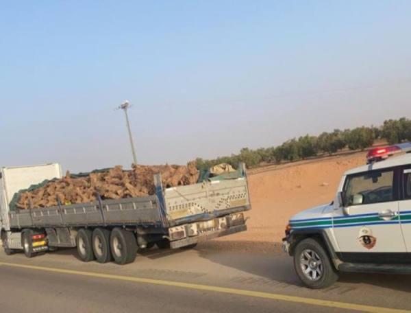 الأمن العام يضبط 11 مركبة محملة بالحطب.. و11 مخالفاً لنظام البيئة