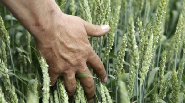 لأول مرة منذ الحقبة السوفيتية.. قطاع الزراعة الروسي يسجل رقما قياسيا