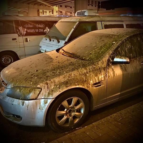إحدى السيارات المهجورة