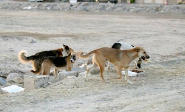 مكافحة الكلاب الضالة عبر  339 بلاغاً  بمكة