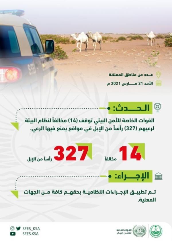 ضبط 14 مواطناً ومقيماً لرعي الإبل بمواقع ممنوعة