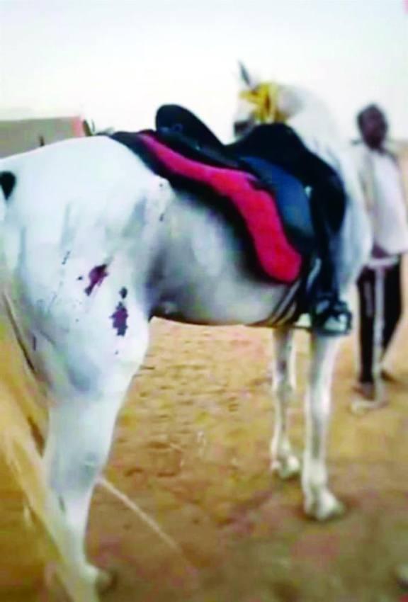 الحصان وقد ظهرت الإصابات على جسده