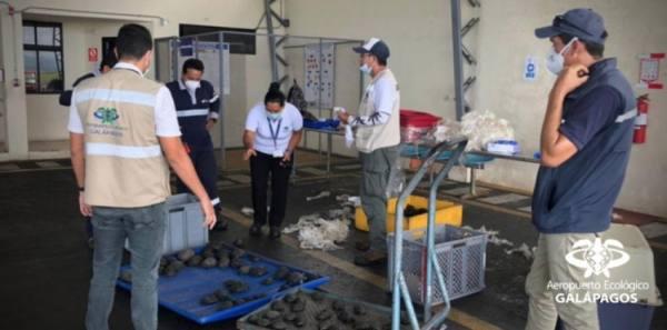 توقيف شرطي إثر تهريبه 185 سلحفاة في غالاباغوس