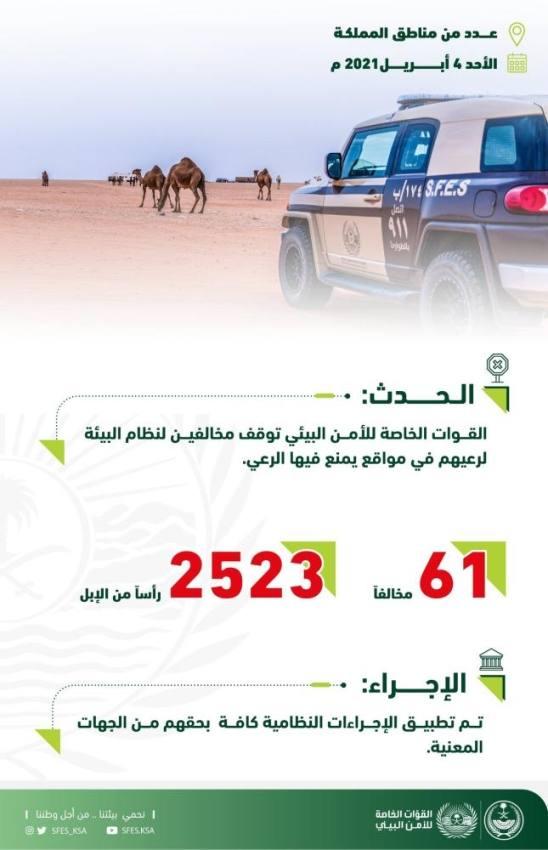 إيقاف 61 مواطناً ومقيماً لرعي الإبل بمناطق ممنوعة