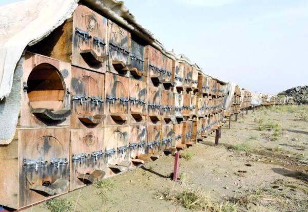 مشروع وطني لتحسين السلالة المحلية لنحل العسل
