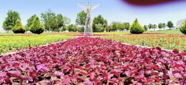 أمانة تبوك تزرع أكثر من نصف مليون زهرة وعشرة آلاف شجرة