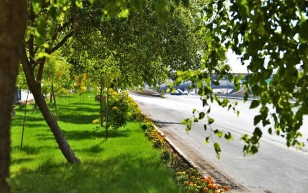 أمانة المدينة تكثّف أعمال تشجير وزراعة الميادين وصيانة الحدائق