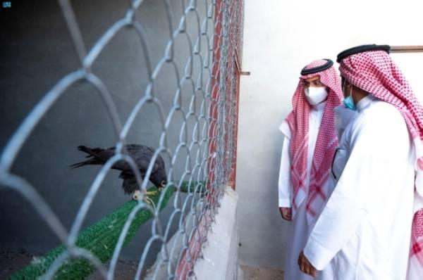 نائب أمير حائل يزور مركز العرادي لإنتاج وحماية الصقور بالعظيم