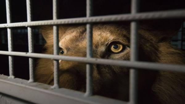 مكافحة حيازة الحيوانات الخطرة في دبي