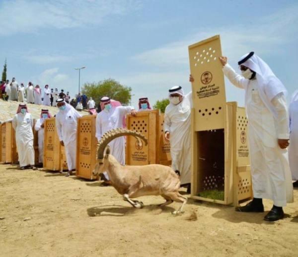 امارة الباحة تتوعد صائدي الحيوانات النادرة