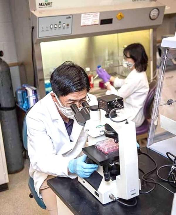 القطط تقود العلماء إلى علاج واعد لـ«كورونا»
