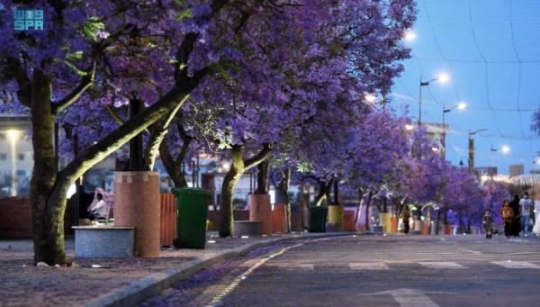 شارع الفن في أبها.. كرنفال الألوان ووجهة العائلات