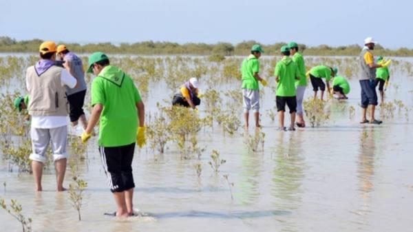 حملة لاستزراع المانجروف بشواطئ ينبع الصناعية