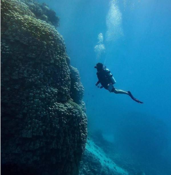 ارتفاعها 10 أمتار..اكتشاف مستعمرة مرجانية ضخمة في البحر الأحمر