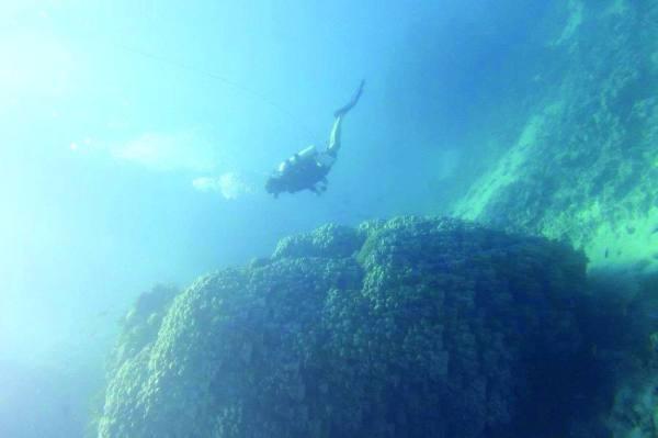 مستعمرة مرجانية بالمملكة عمرها 600 عام