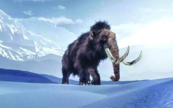 بعد 10 آلاف عام من انقراضه.. إعادة تخليق «الماموث»