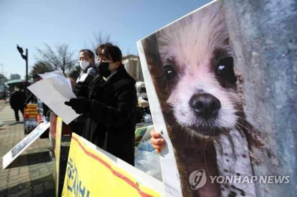 الرئيس الكوري يدعو لحظر تناول لحوم الكلاب في بلاده