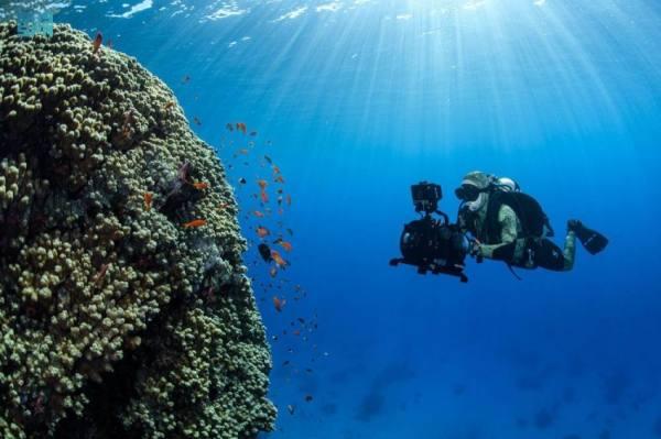 نيوم: اكتشاف كائنات بحرية عملاقة ونادرة وجزر جديدة شمال البحر الأحمر